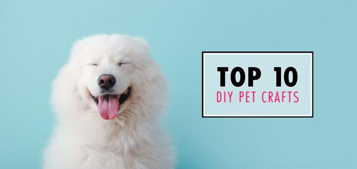 Top 10 DIY Pet Crafts